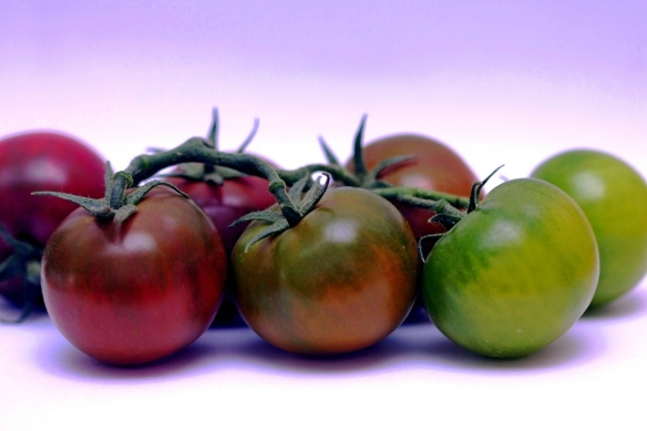 עגבנייה קאמונה (CAMONE) מקורסיקה